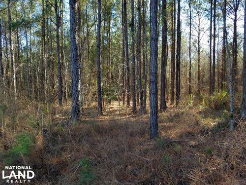 Perote Timber & Hunting Tract : Perote : Bullock County : Alabama