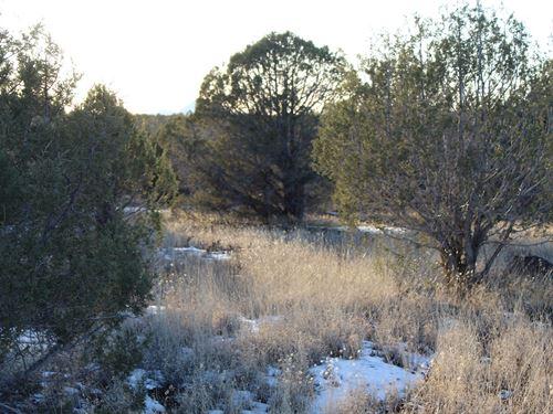 Mountain Land in Ashfork AZ : Ash Fork : Coconino County : Arizona