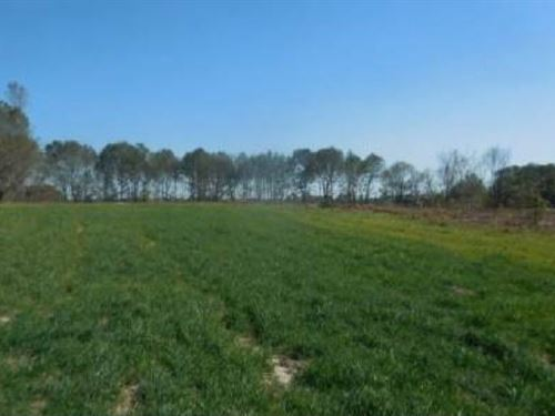 105 Acres For Sale : Branford : Suwannee County : Florida