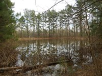 14 Acres Utilities Place Lincoln : Bogue Chitto : Lincoln County : Mississippi