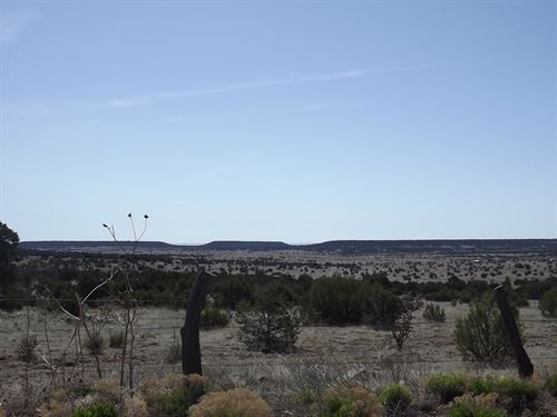 Manzano Mountain Land 50 Acres : Tijeras : Bernalillo County : New Mexico
