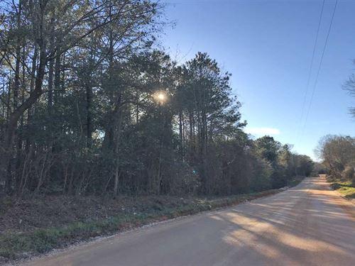 Jack Road Tract : Atmore : Escambia County : Alabama