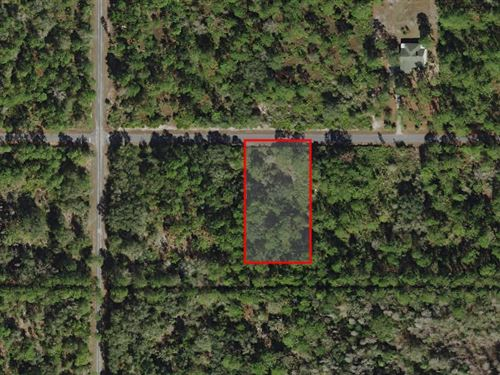 Beautiful Secluded Building Lot : Crystal River : Citrus County : Florida