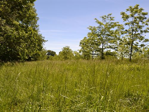 Land For Sale, Live Water, Spring : Willow Springs : Texas County : Missouri