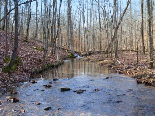 107 Acres In Williamson County : Fairview : Williamson County : Tennessee