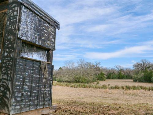 Beautiful 35.97 Acres : Lexington : Lee County : Texas