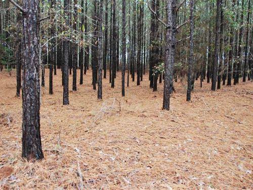 Beautiful Hunting And Investment : Billingsley : Autauga County : Alabama
