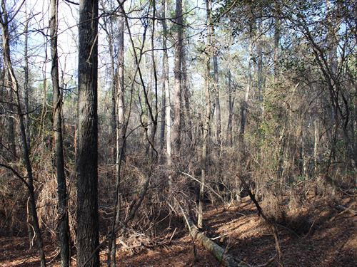A Nature Lover's Paradise : Little Texas : Macon County : Alabama