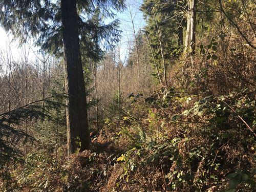 Hopkins Creek : Randle : Lewis County : Washington