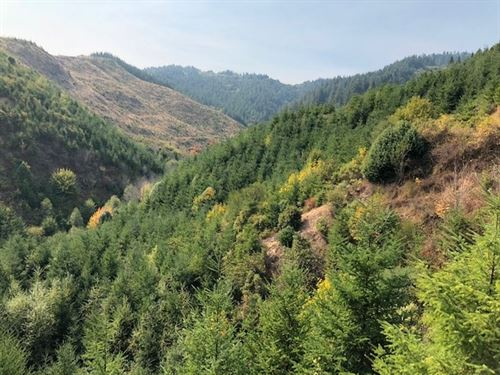41.02 Acres in Bridge, OR : Bridge : Coos County : Oregon
