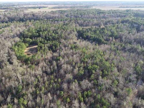 134 Acres Patsiliga Creek Land : Reynolds : Taylor County : Georgia