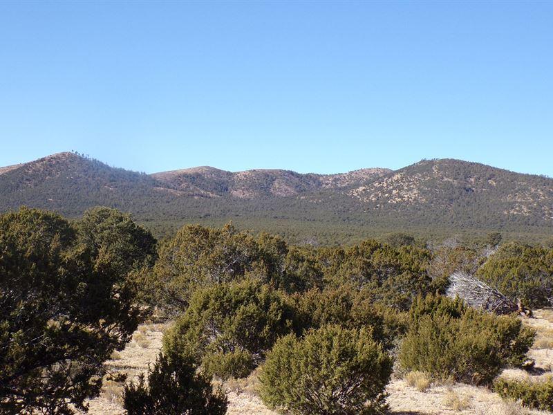 Forested Mountain Acreage Lincoln : Corona : Lincoln County : New Mexico