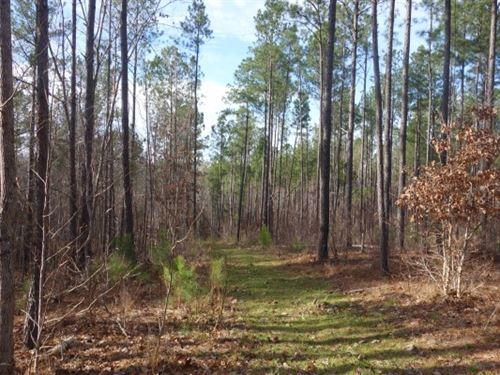46.82 Acres, Fairfield County : Ridgeway : Fairfield County : South Carolina