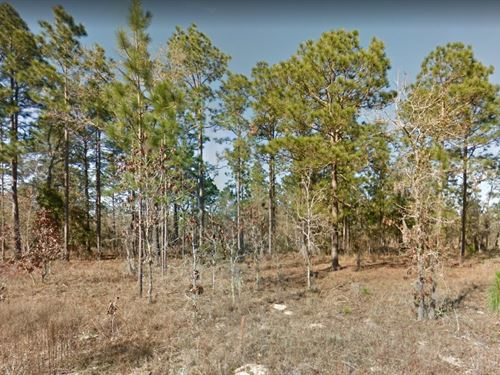 Levy County $8,000 Per Lot : Williston Highlands : Levy County : Florida
