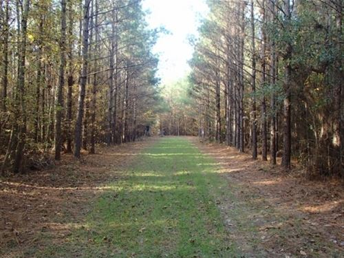 64 Acres In Neshoba County In Phila : Philadelphia : Neshoba County : Mississippi