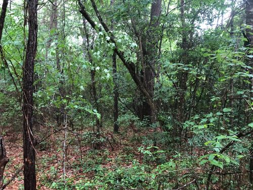 Great Property : Poplarville : Pearl River County : Mississippi
