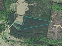 Desirable Wooded Acreage : Union Point : Taliaferro County : Georgia