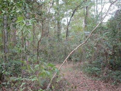 10 Acres Subdivision, Build Your : Monticello : Jefferson County : Florida