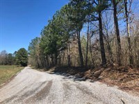 210 Acres Of Hunting / Timber : Vinemont : Cullman County : Alabama