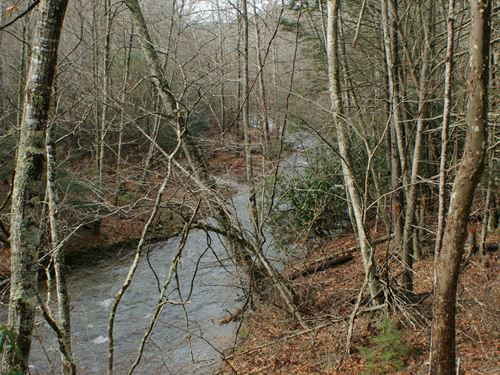 23.9 Acres With Mountain Stream : Mouth Of Wilson : Grayson County : Virginia
