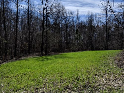 Napolean Pines 32+/- Acres : Woodland : Randolph County : Alabama