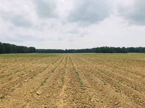 192 Acres In Chickasaw County In Ho : Houston : Chickasaw County : Mississippi