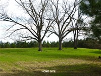 66-096 Pine Apple Tract : Pine Apple : Wilcox County : Alabama