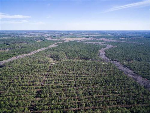 Prime 701 Acre Timberland Tract : Ludowici : Long County : Georgia