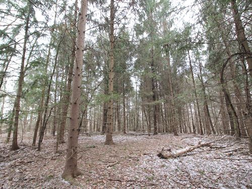 Ford Rd, 50 Acres : Mt Perry : Muskingum County : Ohio