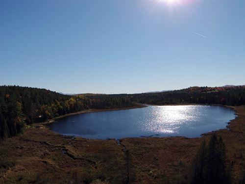 Harriman Pond Forest : Newbury : Orange County : Vermont