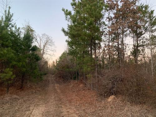 Young Timberland / Hunting Land : Chidester : Ouachita County : Arkansas