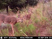 Oklahoma Hunting & Ranch Land : Burns Flat : Washita County : Oklahoma