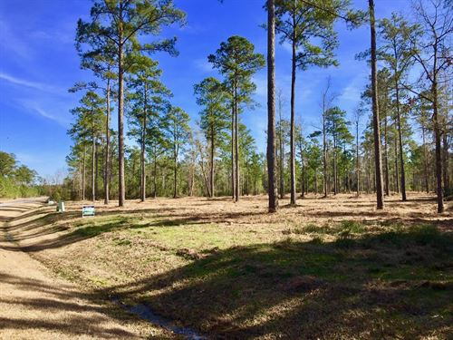 Water Access Lot Beaufort County Nc : Belhaven : Beaufort County : North Carolina