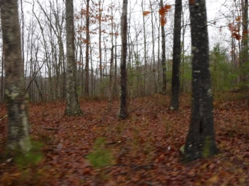 5.02 Ac, Wooded, Utilities Avail : Moss : Clay County : Tennessee