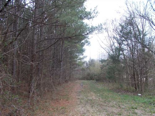 Timber Tract With Multiple Attribu : Pontotoc : Mississippi