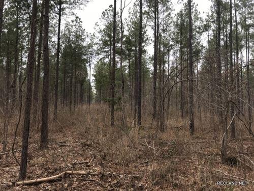 39.7 Ac, Pine Timberland & Hun : Kelly : Caldwell Parish : Louisiana
