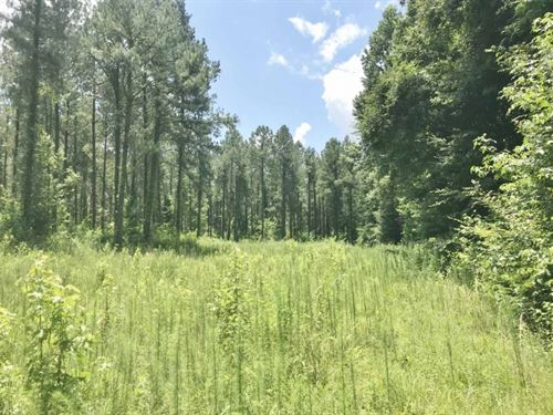 105 Acres South MS Timberland Borde : Meadville : Franklin County : Mississippi