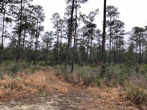 Rare Tract Adjoining Nat'l Forest : Perkinston : Stone County : Mississippi