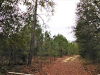 Outstanding Hunting on 23 Acres in : Branchville : Orangeburg County : South Carolina