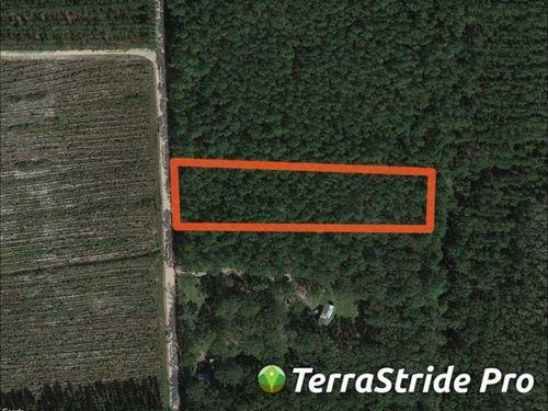 1.97 Acres, Tract 1 in Camden Coun : Waverly : Camden County : Georgia
