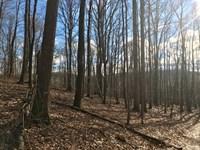 Wooded Land Close to Blue Ridge : Meadows Of Dan : Floyd County : Virginia