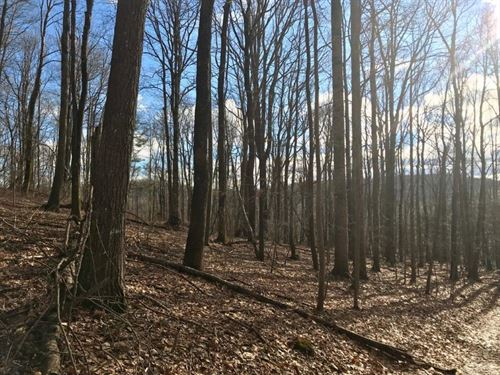 Wooded Land Close to Blue Ridge : Meadows Of Dan : Floyd County : Virginia