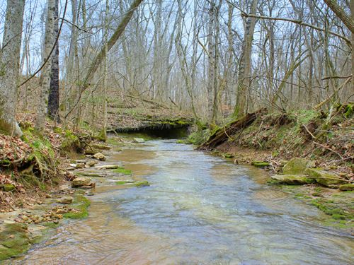 Lovely Gently Rolling 33 Acres : Duck River : Hickman County : Tennessee