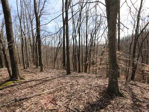 Wooded Tract, Putnam County : Monterey : Putnam County : Tennessee