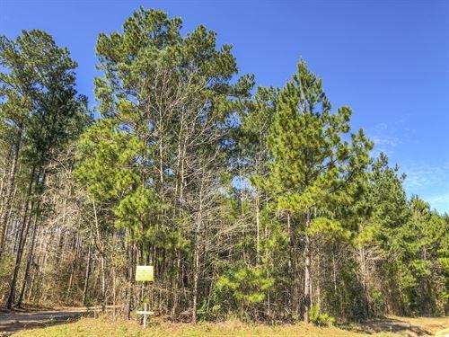 3.1 Acres Big Woods Road : New Waverly : San Jacinto County : Texas