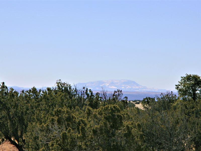 37 Acres With Greenhouses : Saint Johns : Apache County : Arizona