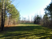 Tennessee Land, Row Crop Farm Land : Adamsville : McNairy County : Tennessee