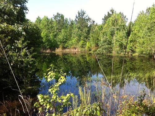 66 Acres Of Pristine Land : Atoka : Oklahoma