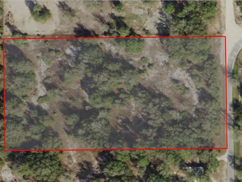 4.93 Acre, Mini Farm, Outstanding : Dunnellon : Citrus County : Florida