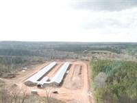 Langham Road Breeder Farm : Repton : Conecuh County : Alabama